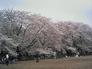 20060402.jpg