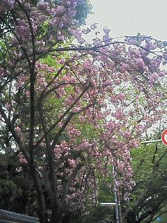 image/nono-note-2006-04-22T17:10:11-1.jpg