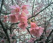 image/nono-note-2006-04-02T17:16:19-1.jpg