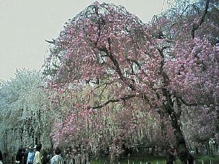 image/nono-note-2006-04-08T11:52:00-1.jpg