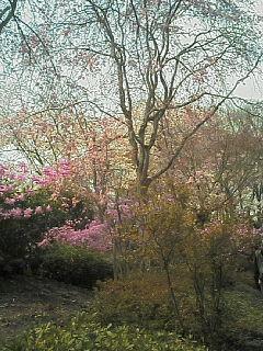 image/nono-note-2006-04-09T13:40:47-1.jpg